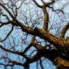Tree Twirl