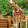July 4th at the Denver Zoo | Photography