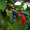 Butterfly Pavilion | Photography