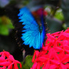Butterfly Pavilion | Photography