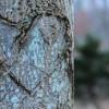 Stonybrook   Photography