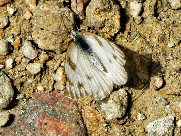 Moth-121594414646225